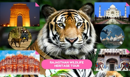 Rajasthan wildlife Heritage Tour India