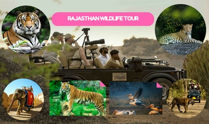 Rajasthan wildlife Tour Package India